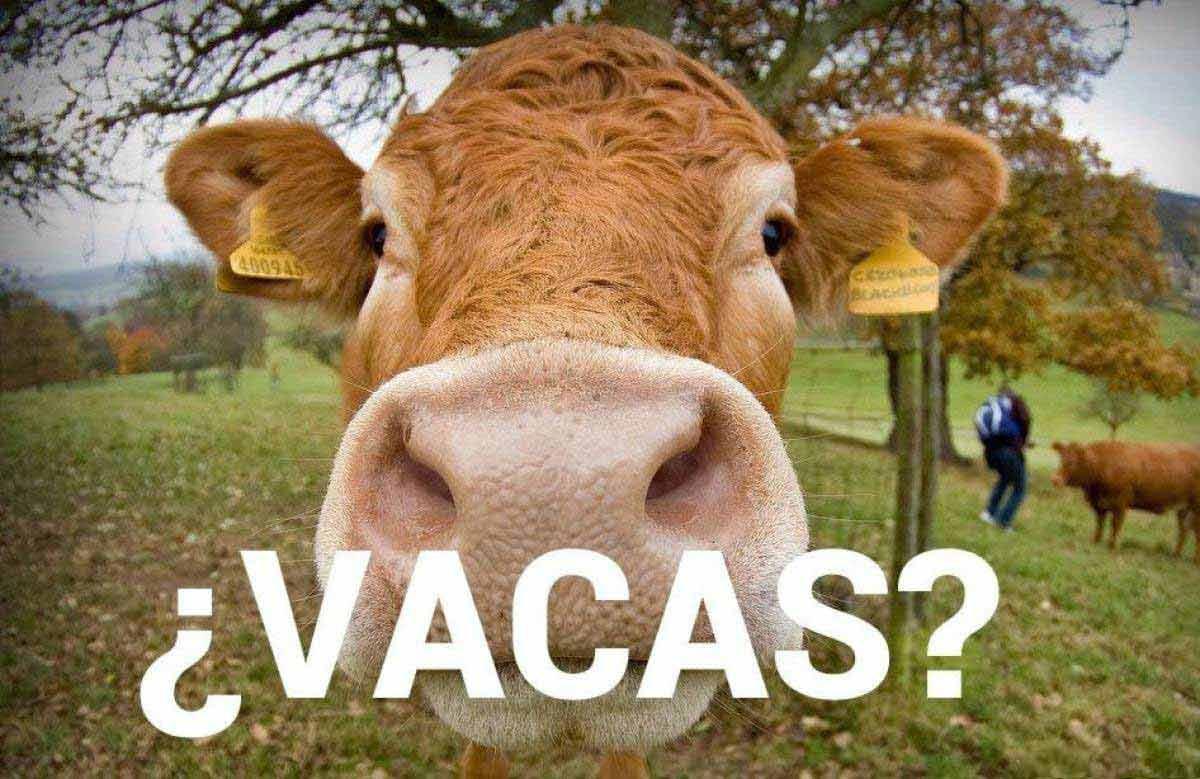 La economía explicada con vacas ⭐