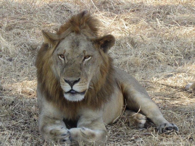 Viajar en safari por Tanzania... y eres feliz