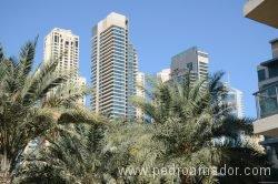 Dubai Marina 3 1