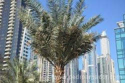Dubai Marina 48