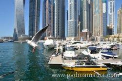 Dubai Marina 78