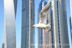 Dubai Marina 84